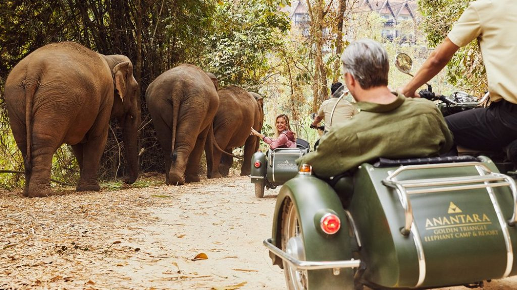 dormir avec les elephants en Thailande