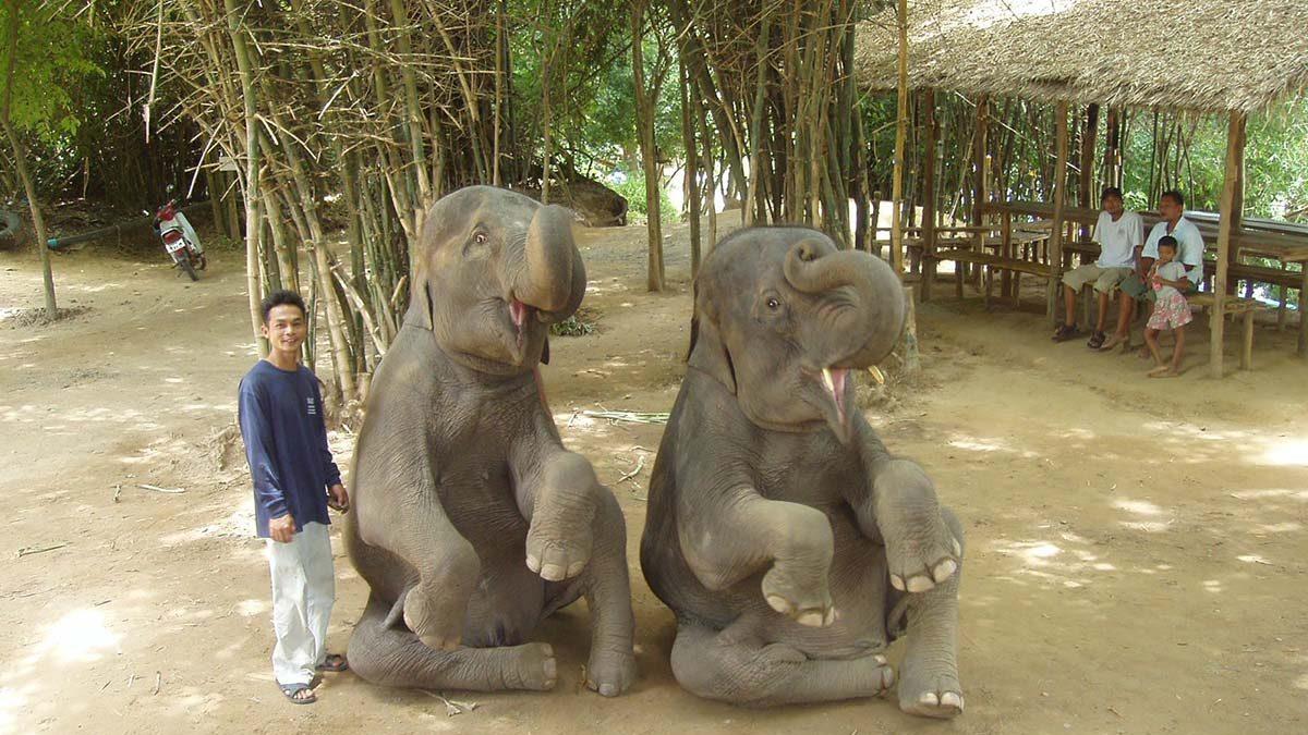 éléphant-thailande-éthique-ISTTAGO