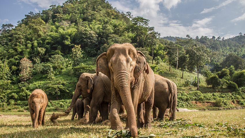 sanctuaire elephant chiang mai thailande