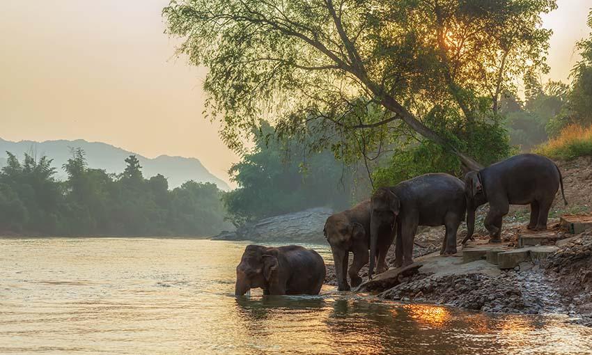 sanctuaire elephant kanchanaburi thailande
