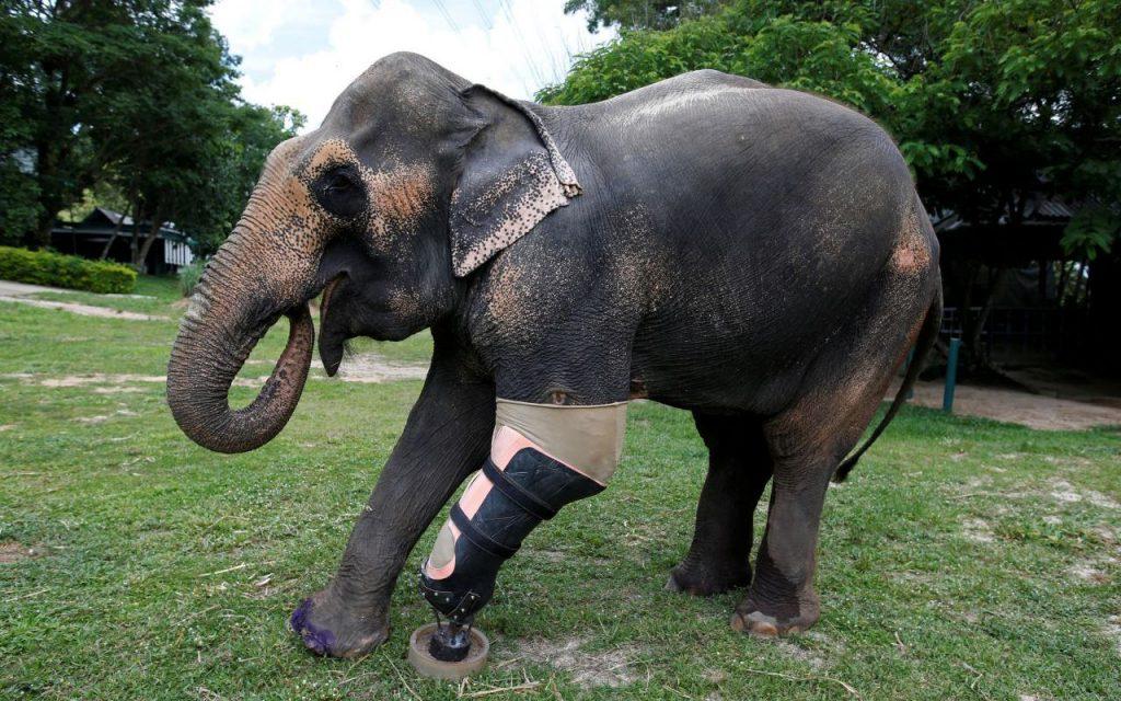 sanctuaire elephant phuket thailande