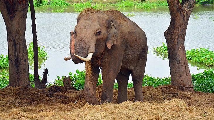 Elephant Stay ayutthaya